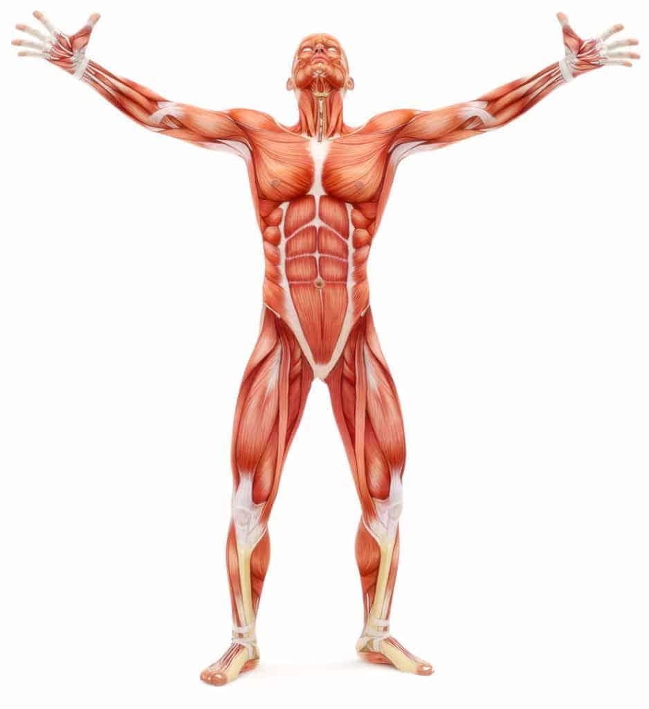 fascia fitness in human body