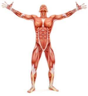fascia human body