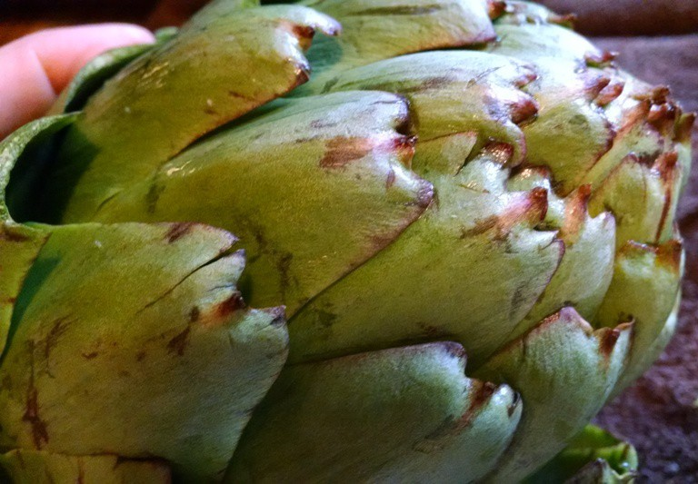 how to cook and eat artichokes. with barbs