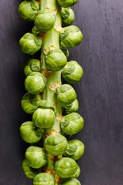 raw brussels sprouts on stalk against dark background