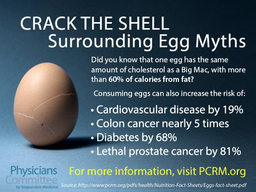 cholesterol in eggs