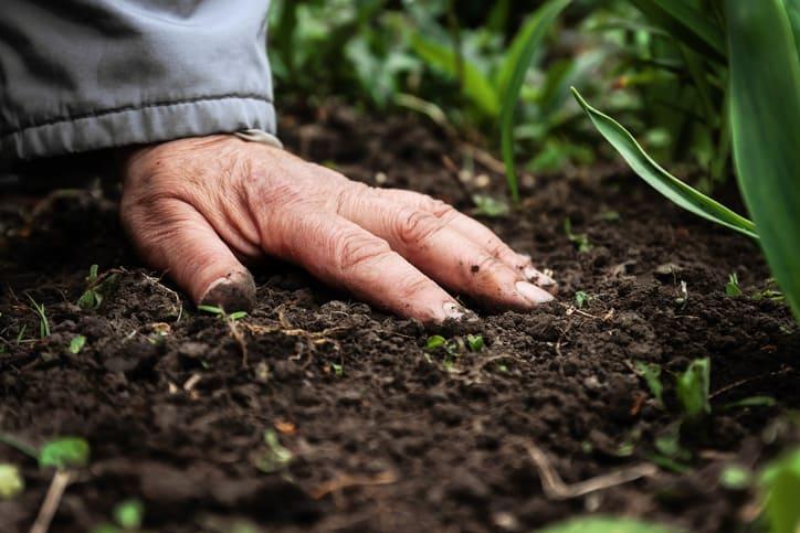 b12 supplements for vegans. b12 found in soil. hand in soil