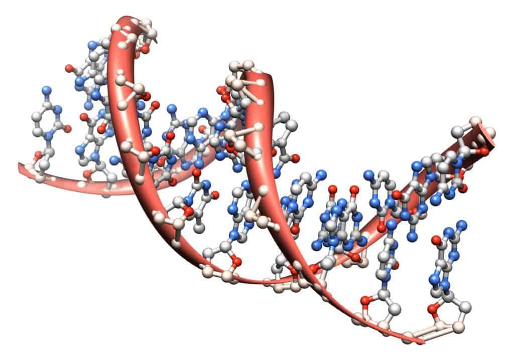 Protein DNA model on white background