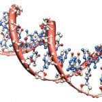 organic chemistry: model of the DNA molecule - illustration of a biological particle on white background
