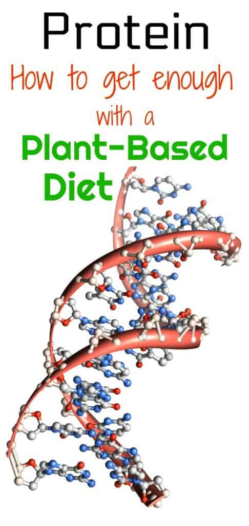 protein and plant based diet pinterest DNA photo