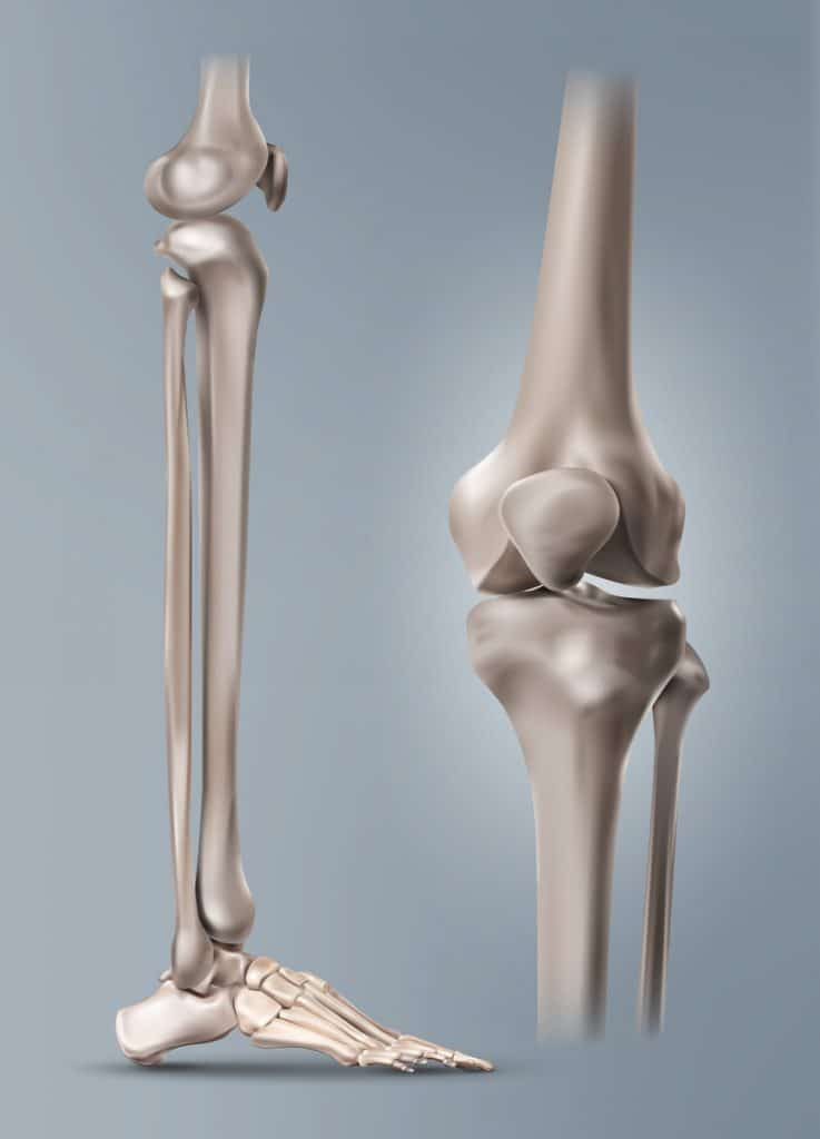 leg bones on gray background