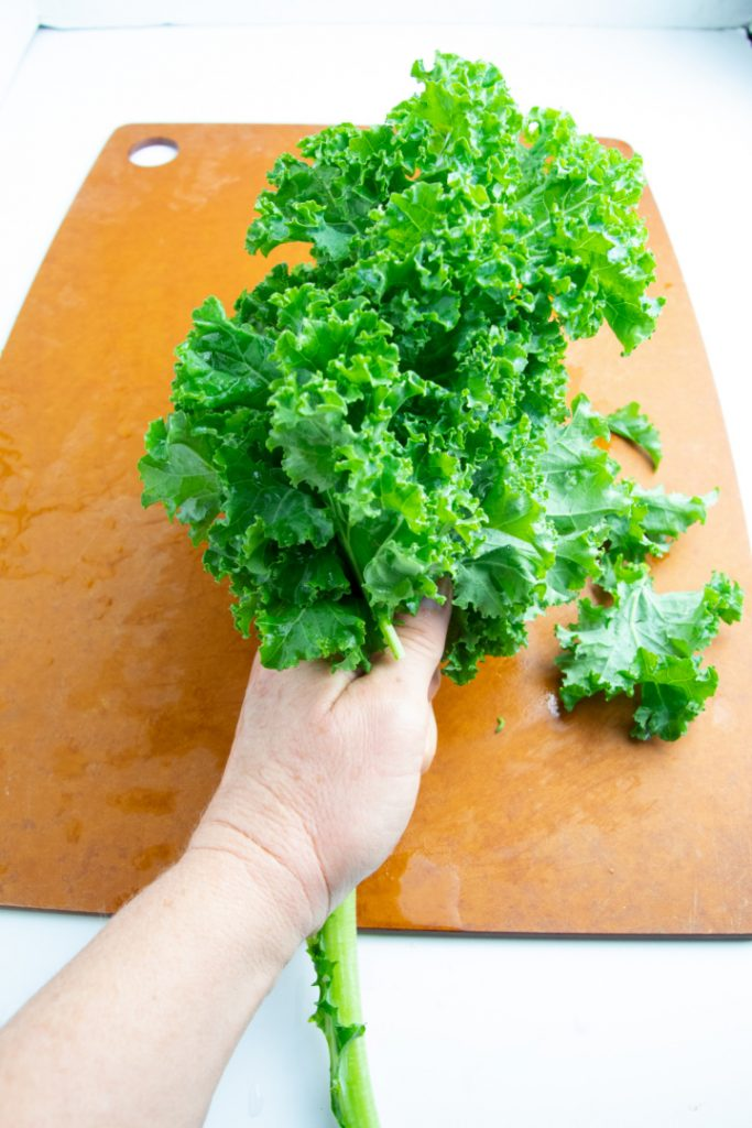 hand holding bunch of kale